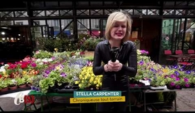 Chronique TMC - TV SHOW CARREMENT BIENS- STELLA CARPENTER